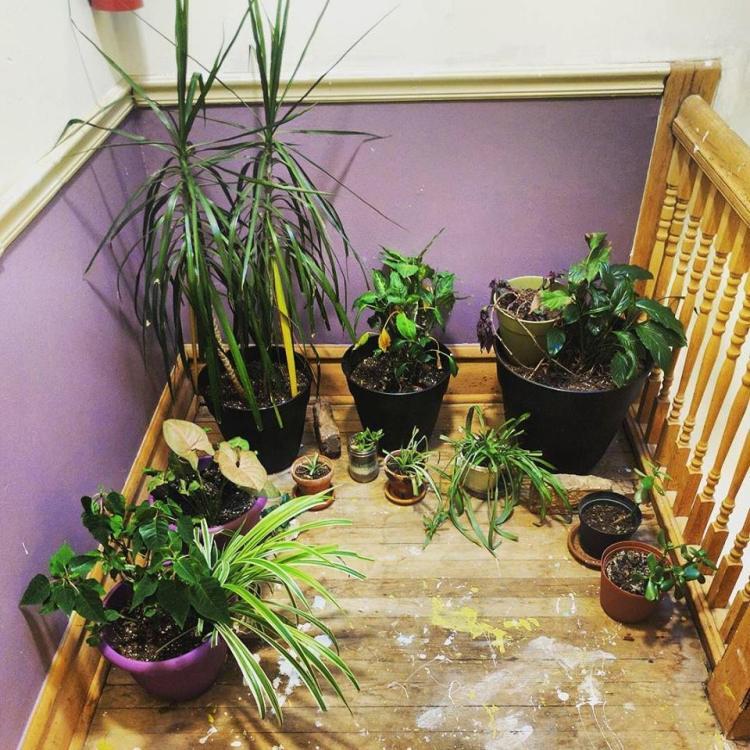 Wells plants